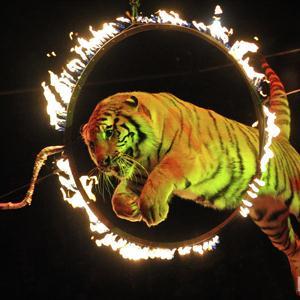Цирки Крымска