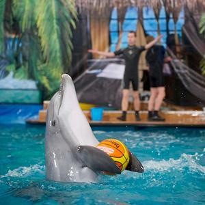 Дельфинарии, океанариумы Крымска