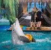 Дельфинарии, океанариумы в Крымске