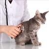 Ветеринарные клиники в Крымске